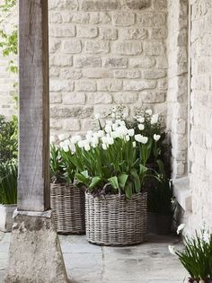 Thrilling About Container Gardening Ideas. Amazing All About Container Gardening Ideas. Back Gardens, Small Gardens, Outdoor Gardens, Home Decor Baskets, House With Porch, Garden Cottage, White Gardens, Garden Planters, Wall Planters