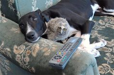 Friendship knows no boundaries - just look at these amiable animals.