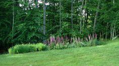 foxglove garden in Connecticut