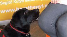 A képre kattintva megtekinthető a vakvezető kutyák kiképzéséről szóló információs kisfilm ;)