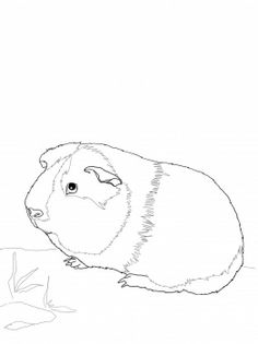 Cute Guinea Pig Coloring Page    We Used This To Create A Pet Sitting Thank  You Card!