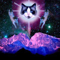 cat gods