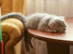 cat sleeping on table - cute cats sleeping photos Baby Animals, Funny Animals, Cute Animals, Funniest Animals, Animal Funnies, Animals Images, Cute Kittens, Cats And Kittens, Fluffy Kittens