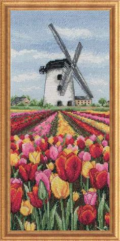 DUTCH TULIPS FIELDS OF COLOR