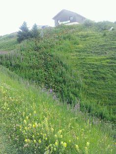 Végétation à La Plagne