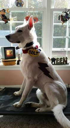 DIY Disney Bolt Halloween Costume for your Dog