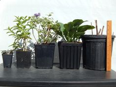 Pot Sizes - Plant Delights Nursery Mail Order Perennials