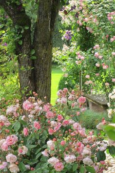 The right varieties to compliment and accent the home's style and your vision, will contribute to the success of your landscape and ultimate rose garden design. Pink Garden, Dream Garden, Garden Paths, Garden Landscaping, Beautiful Gardens, Beautiful Flowers, The Secret Garden, Growing Roses, Garden Cottage