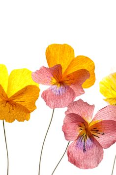Crepe paper pansies, handmade and photographed by Papetal