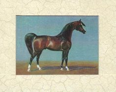Bay  Gladys Brown Edwards colors of the Arabian Horse