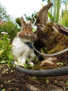 Rabbit -  Kiwi on www.yummypets.com