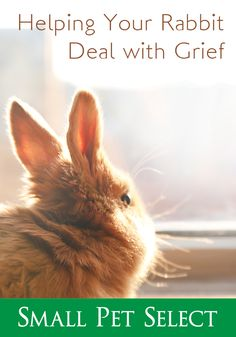 Dealing With Grief, Sadness, Rabbits, The Selection, Survival, Pets, Animals, Animais, Animales