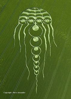 Jelly Fish Crop Circle