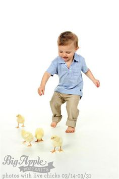 Chasing chickens for Easter Photo Shoot. Easy animals to work with for Easter.
