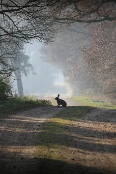 A Companion on a Misty Morning Walk Down the Lane ....