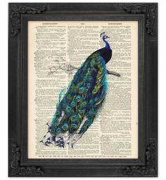 peacock print @Chelsea Garrow