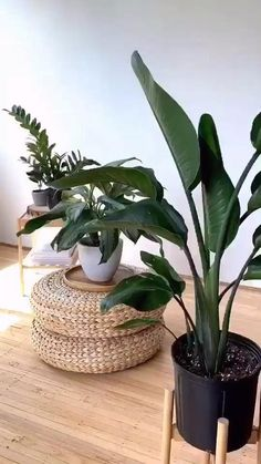 PLANT IDEAS FOR YOUR HOME - *LOVING THESE PINS!* #aloeveraplantindoor Organic Hair Dye, Dyed Natural Hair, Natural Hair Care, Dyed Hair, Natural Hair Styles, Shade Plants, Green Plants, Air Plants, Potted Plants