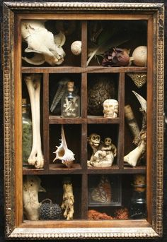 Cabinet of curiosities - plays with the notion of Vanitas. The objects in the cabinet are symbolic of different things. *use of bones and jars* Shadow Box, Curiosity Cabinet, Curiosity Shop, Cabinet Of Curiosities, Natural Curiosities, 3d Studio, Assemblage Art, Vanitas, My New Room