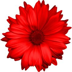 осенние цветы,красные,оранжевые,цветы осени,осенние цветы ❤ liked on Polyvore featuring fillers and flowers