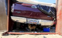 A dog stands under a car in a temporary shelter where its owner has been living temporarily, near the Colombian village of Villa del Rosario