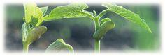 Seed saving... start here