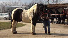 Caii lui Ionut de la Sacadat, Bihor - 2020 Nou!!! Romania, Animals, Animales, Animaux, Animal, Animais