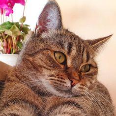 Képes idézetgyűjtemény szómíves érzelmiségieknek Fodor Ákos költő-műfordítótól   Szépítők Magazin Haiku, Cats, Diy, Animals, Gatos, Animales, Bricolage, Animaux, Do It Yourself