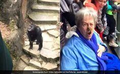 VIRAL VIDEO: Chimpanzee flings POO at a grandmother at Michigan zoo #news #alternativenews