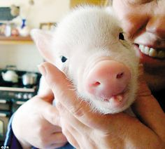 Oh my goodness!!!! AW!!!! I want a pet pig so bad!!!!
