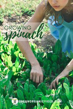 186 Best Garden Images In 2020 Garden Plants Container Gardening