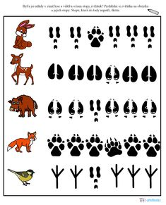 Stopy zvířat  - pracovní list Preschool Learning Activities, Animal Activities, Preschool Science, Teaching Kids, Woodland Animals Theme, Forest Animals, Animal Footprints, March Themes, File Folder Activities
