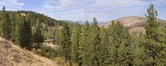 Pine forest cabin, Washington by Balance Associates Architects