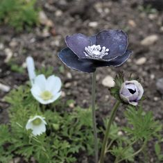 Purple patinated sterling silver Anemone flower handcrafted by Danniella Jayne Wilde