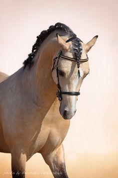 Buckskin Beauty
