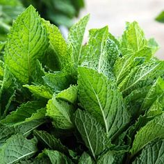 Lemon Balm Grow it: Pot it, or it will colonize your garden. Use it: Use for healing and preventing cold sores. Also, rub leaves directly onto skin as a natural insect repellent or to soothe bites.