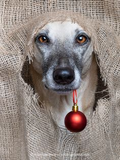 Season greetings - All my pictures here can be licensed or bought as prints. Just drop me a line via info@elkevogelsang.com.