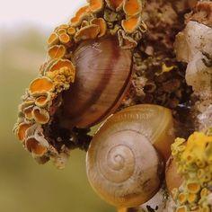 Deze slakken verstoppen zich onder geel korstmos. Prachtige foto door Johan van der Gouw #Fotowedstrijd #Natuurmonumenten