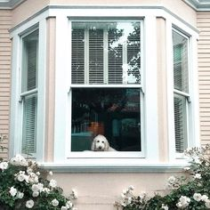 Omg this house is so cute! Like the flowers the the window style and the dog looking out the window like something straight out of a movie