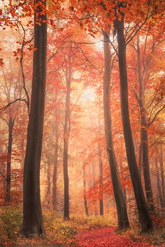 ~~Guardians | autumn forest landscape by Starting Out...~~