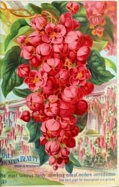 1899 - Our new guide to rose culture : - Biodiversity Heritage Library. #BHLinbloom