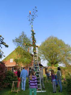 Zu den ostfriesischen Traditionen gehört auch das Aufstellen eines Maibaumes.