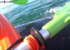 Una ballena cae encima de una pareja que pasea en kayak