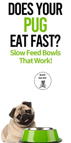 If you have a greedy Pug that loves gobbling down their food. These slow feeder bowls will help you slow them down so they won't deal with an upset tummy! Pug Facts, Pug Accessories, Black Site, Old Pug, Upset Tummy, Mosaic Kits, Slow Feeder, Fast And Slow, Baby Pugs