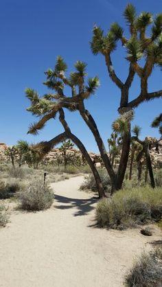 Joshua Tree hike