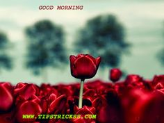 good morning awesome wallpapers