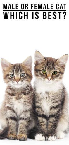 Fans Of Kittens Meow Click Save Follow Pin Aninspiring To Check Out Unique Gifts Decors Diy Craft For Cute Kitties Cats Tumblr Cats Pets Cat Lady