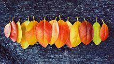 Fall, Autumn, Leaves, Colors