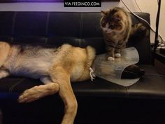 Having a cone collar fitted at the vet was bad enough. . .