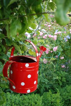 Red and white polkadot watering can for the garden whimsical gardening