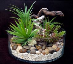 Pin by Yza Tuazon on Gardening Terrarium plants Terrarium For Sale, Air Plant Terrarium, Garden Terrarium, Succulents In Containers, Planting Succulents, Air Plants, Indoor Plants, Plante Crassula, Yucca